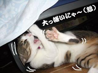 寝た振り猫05