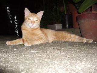 寝た振り猫06