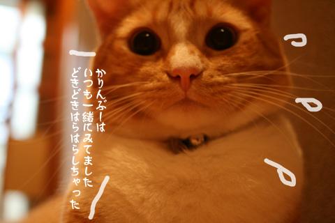 IMG_8759.jpg