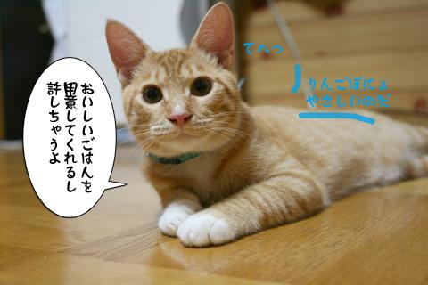 IMG_8858.jpg