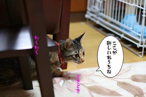 IMG_9135.jpg