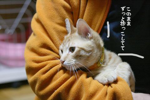 IMG_9229.jpg