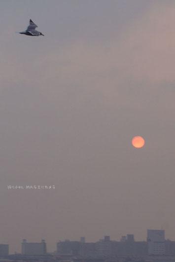 今日の太陽