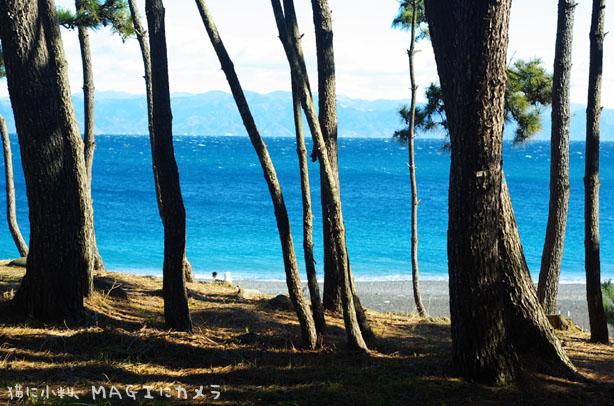 松原からのぞく青い海
