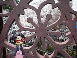 橋の飾り彫りも桜(・∀・)