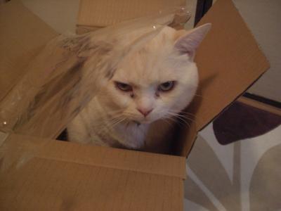 箱に入ったぁーーー(@゜Д゜@;)