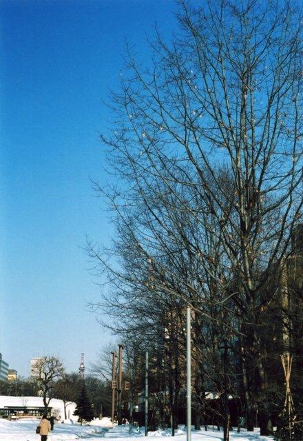 winter scene in odori park1