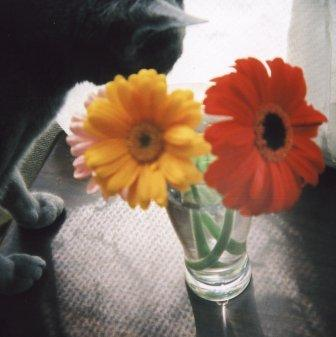 flowers by holga1
