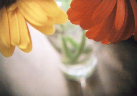flowers by holga2