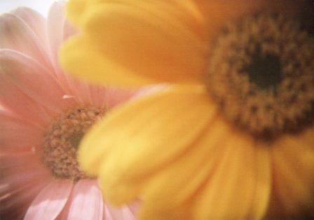 flowers by holga3