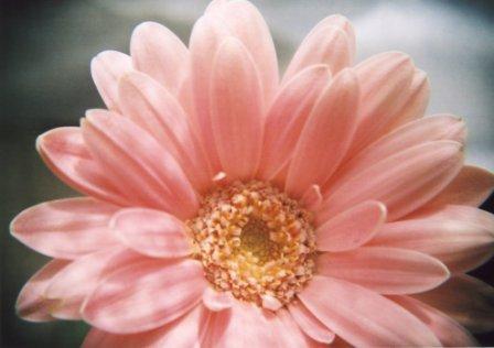 flowers by holga4