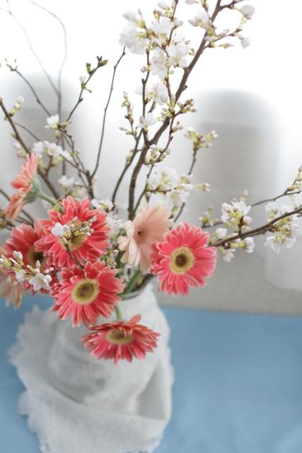 sakura and gebera-10