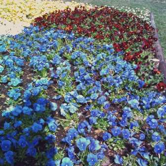 odori flowers
