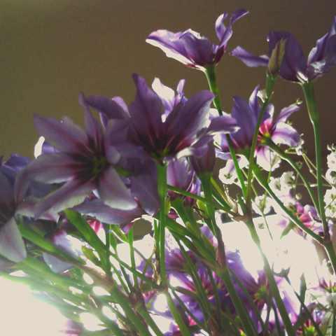 purple flower3