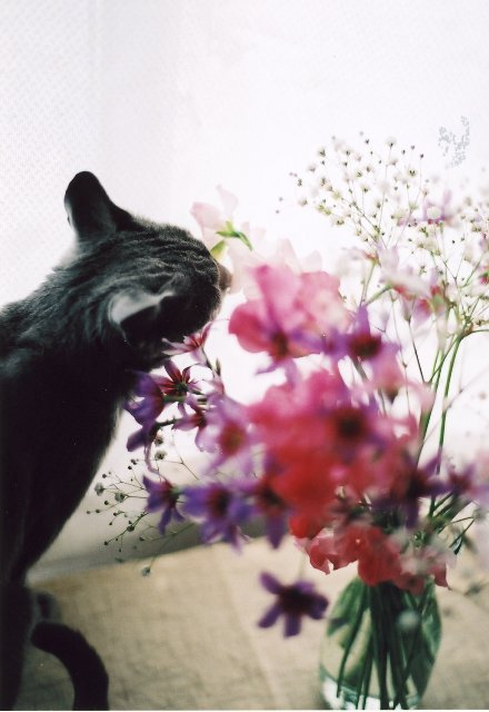 smelling at flowers