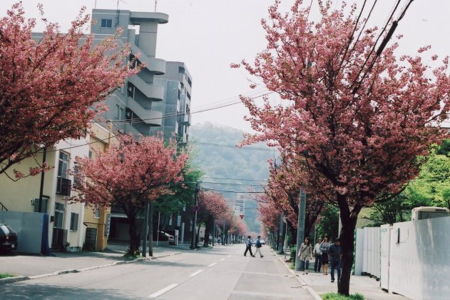 yaesakura road