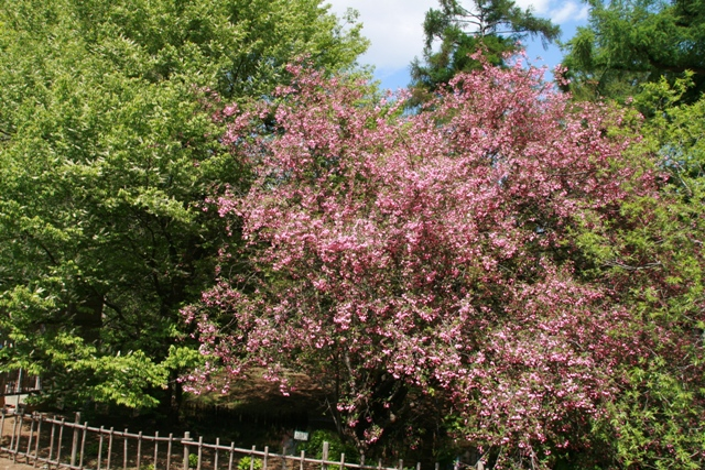 botanical garden10