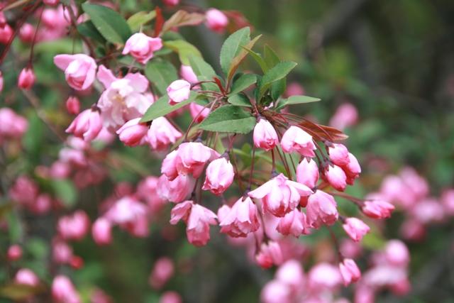 botanical garden11