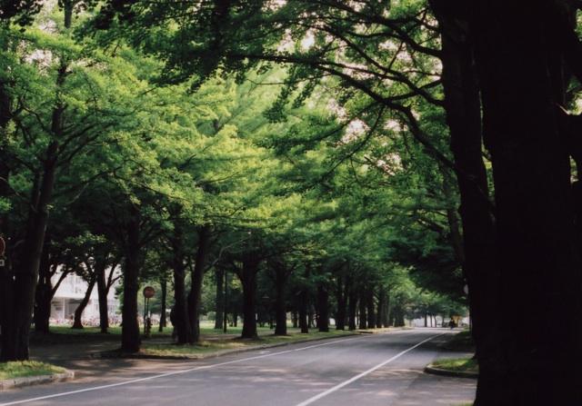 hokudai avenue1