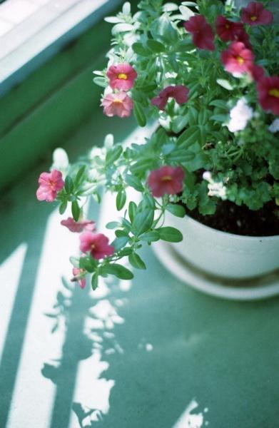 veranda flower2