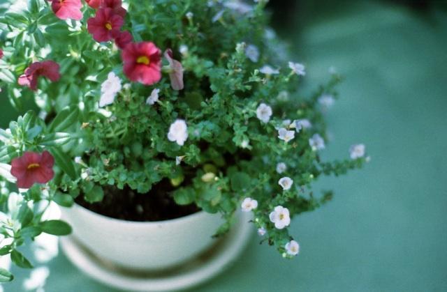 veranda flower1