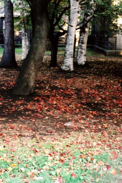 autumn color1