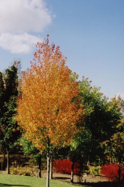 autumn dress1