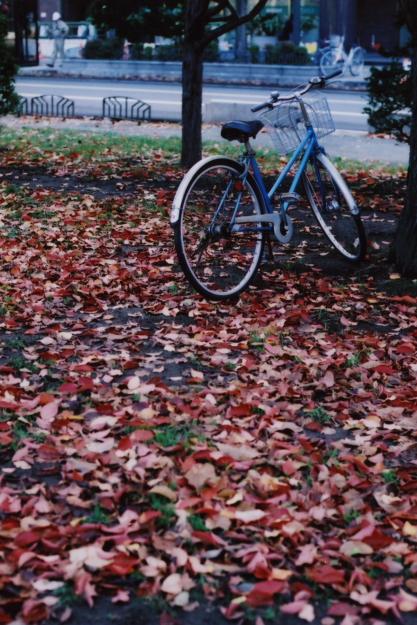autumn at odori park1
