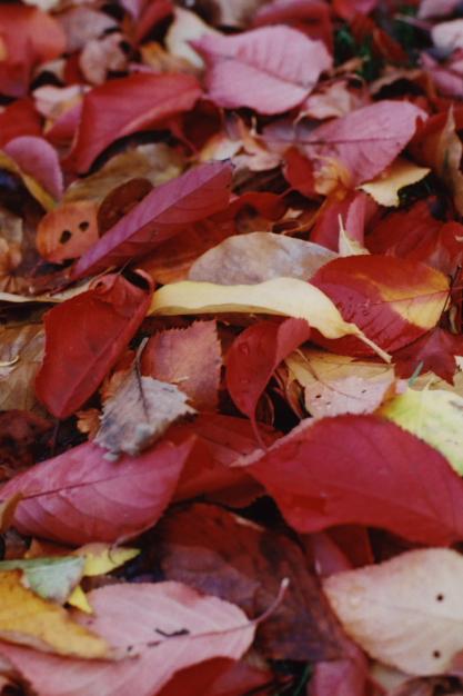 autumn at odori park2