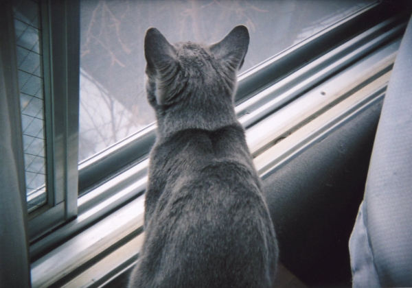 watching outside