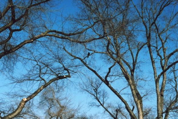 crow and sky1