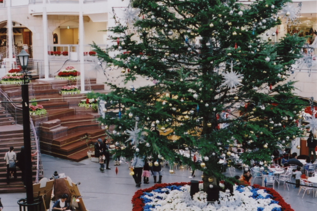 big tree1
