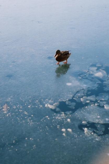iced lake1