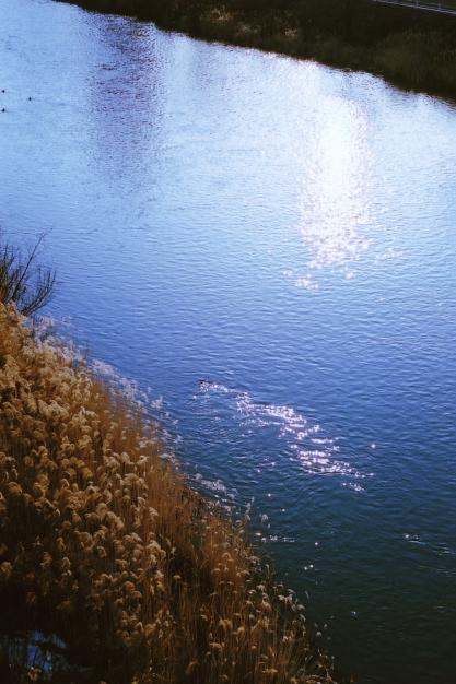 toyohira river1