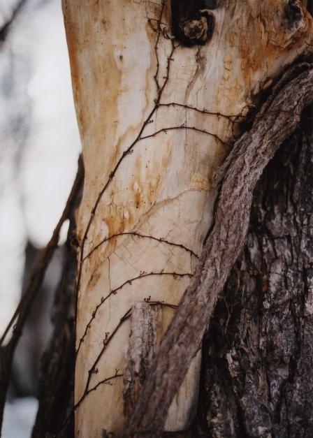 naked tree1
