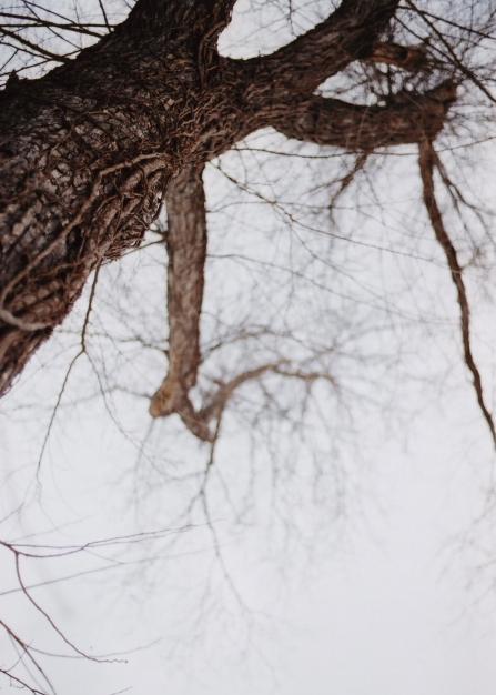 naked tree2