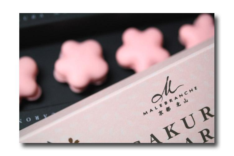 sakura macaron4