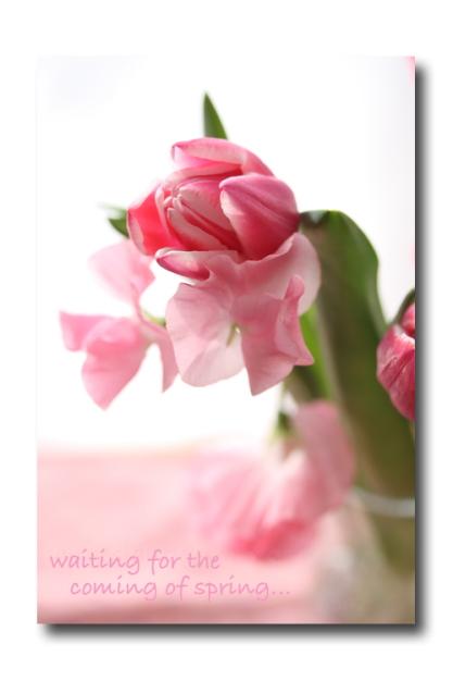 spring pink1