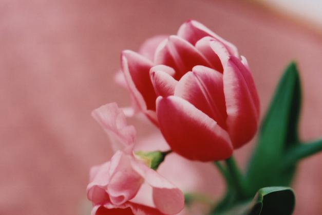 pinkful2