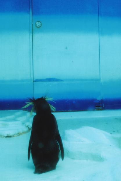 iwatobi penguin2