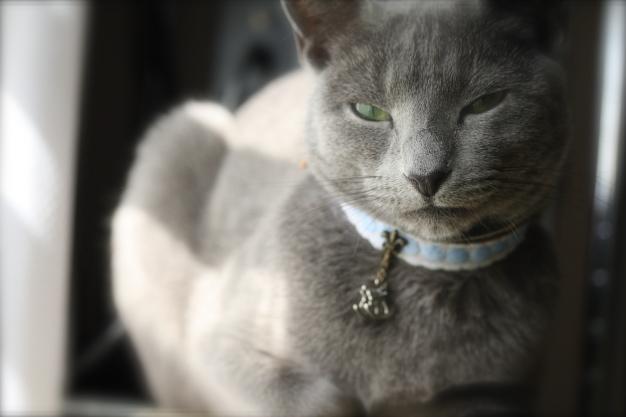 fairy tale collar1