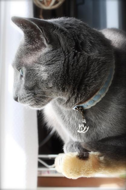fairy tale collar3