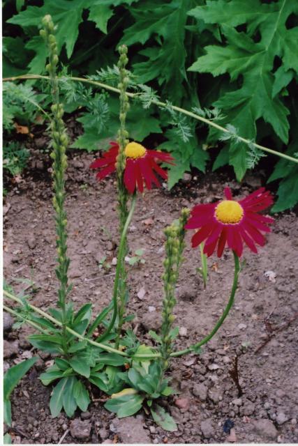 flowers at H.garden3
