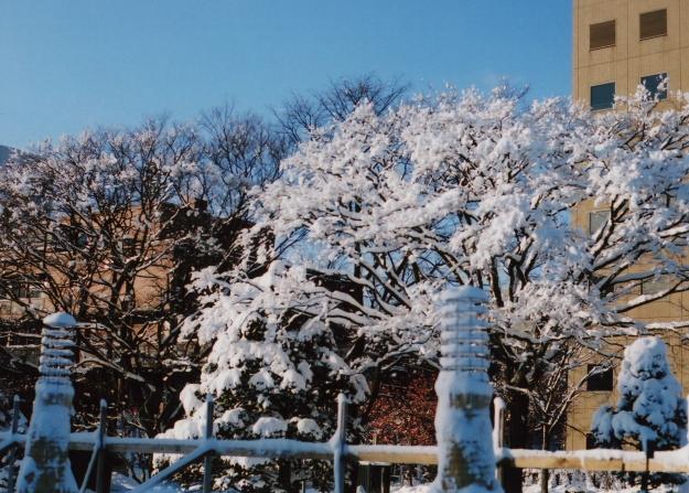 snowflower1
