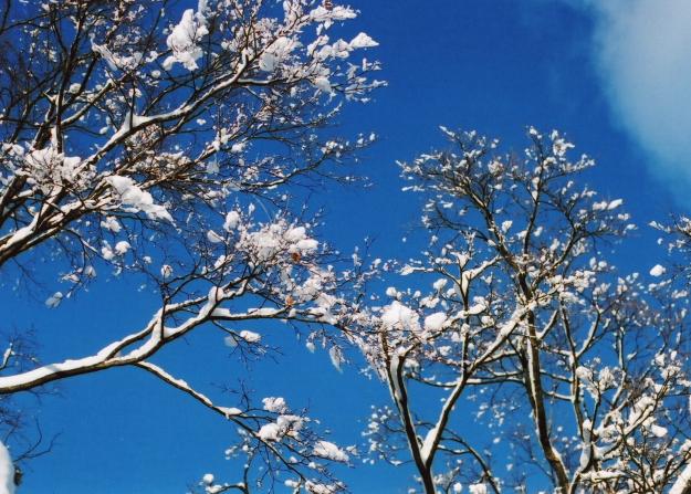 snowflower2