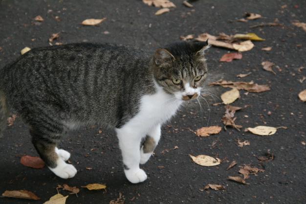 a cat at nakajima1