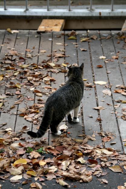 a cat at nakajima2