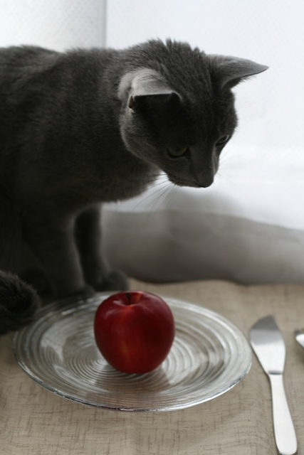 give me the apple