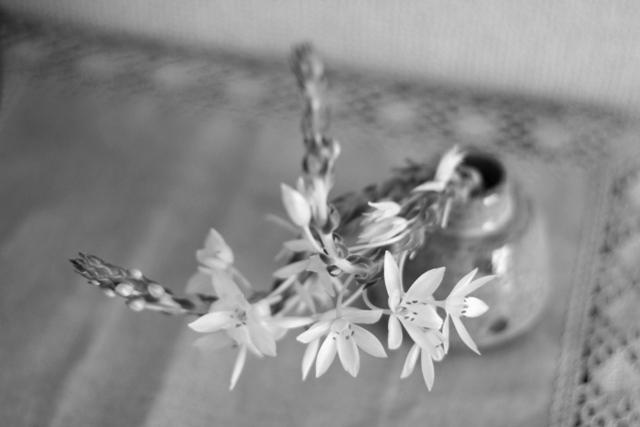 white flower1