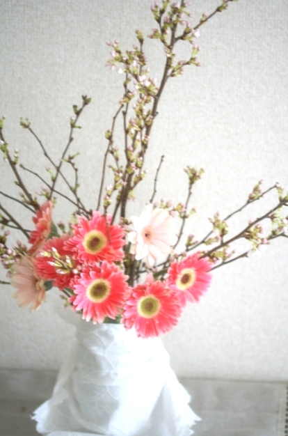sakura and gerbera1